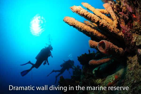 Scuba diving in Dominica's marine reserve