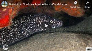 Soufrière Marine Park - Coral Gardens